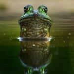 Atlanta Botanical Garden Frog